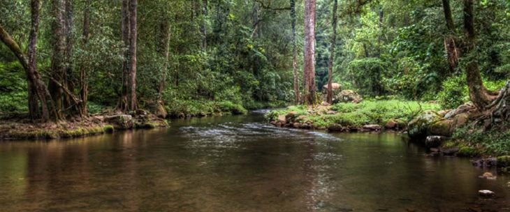mountain stream at the cedars cottages kangaroo valley