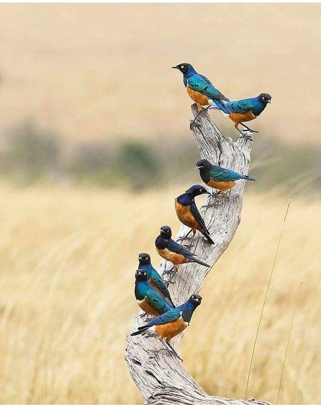 шкурки имеет фотоохота на птиц советы методика этой игры начну