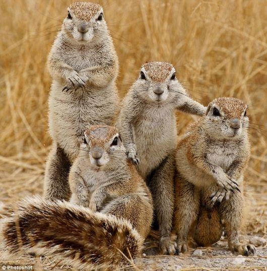 mean mug squirrel gang