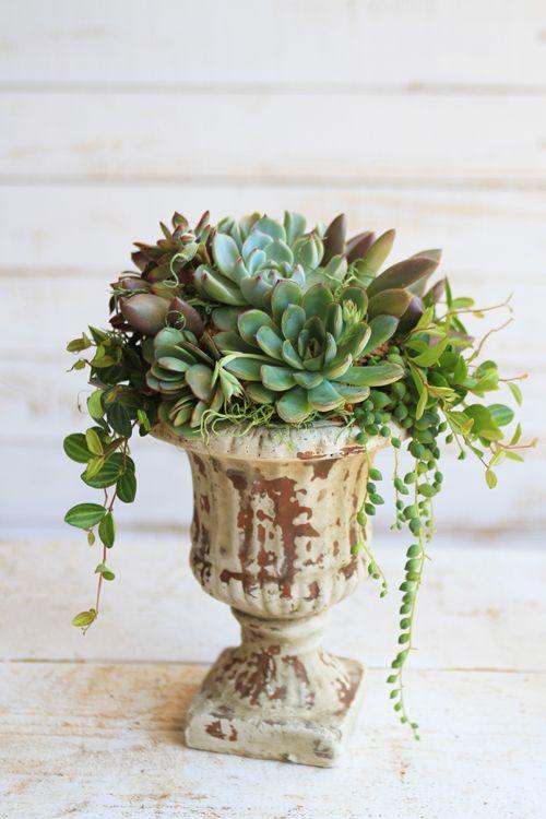 アンティークゴブレット鉢の多肉植物寄せ植え - アトリエ華もみじ
