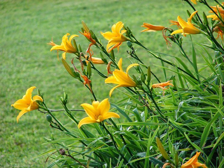 Confira as espécies de flores amarelas que vão deixar o seu jardim ainda mais lindo e alegre!