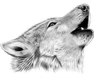 Wolf Tattoos | Tattoo Symbols,Tattoo News,Tattoo Magazine,Tattoo Interview,Tattoo Articles
