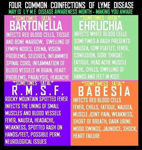 4 common coinfections of Lyme Disease #LymeDiseaseChallenge #NotJustLyme
