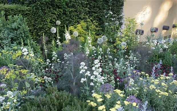 flowering parsnips, valerian, dianthus, fennel -- daily telegraph's garden at the chelsea flower show
