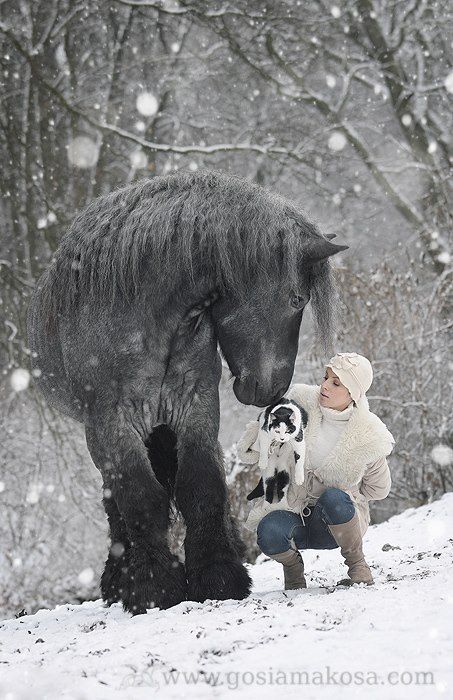 Someday I would love to have a humongous horse.  But I suppose I should learn to ride better first....