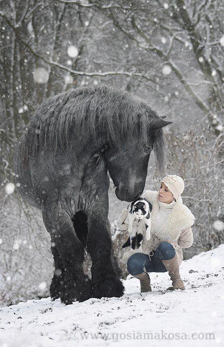 Beautiful Draft Horse - I. Want. Him.