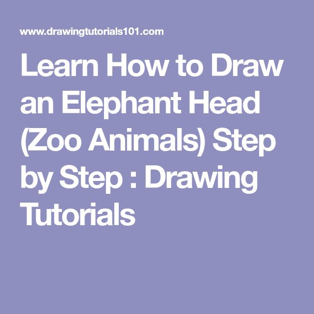 Learn How to Draw an Elephant Head (Zoo Animals) Step by Step : Drawing Tutorials