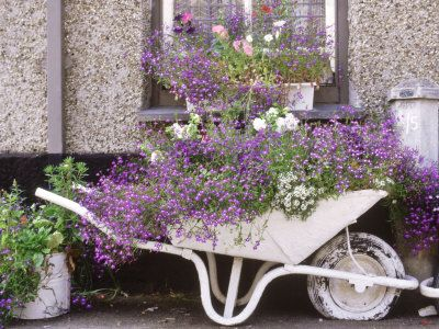 Somehow seems very french to me.  Love the color scheme in this wheelbarrow.  The white flowers go really well with the whitewashed #wheelbarrow