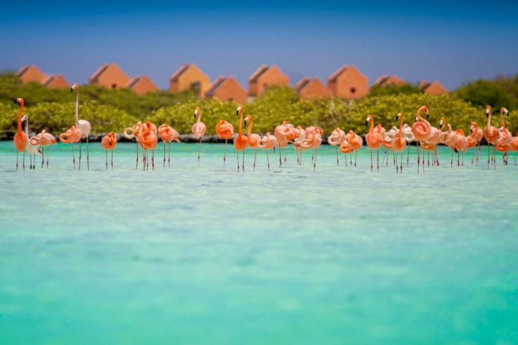 Flamingo s pekelmeer bonaire more