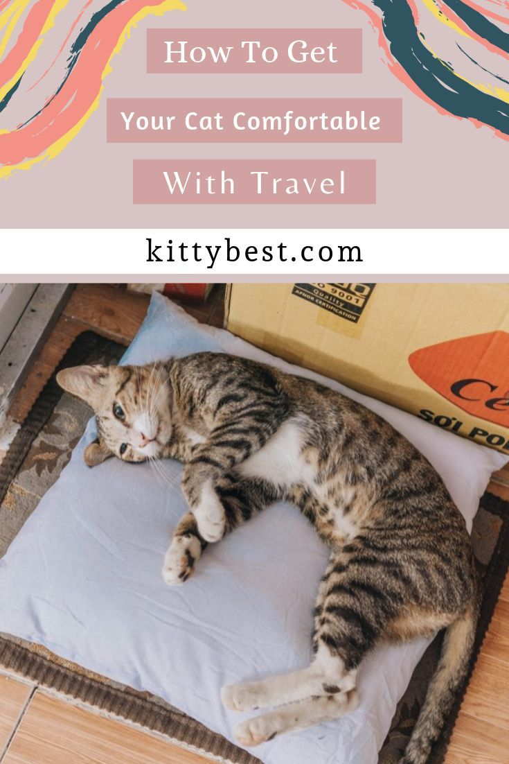 Getting A Cat To Be Comfortable With Traveling Can Take A Little