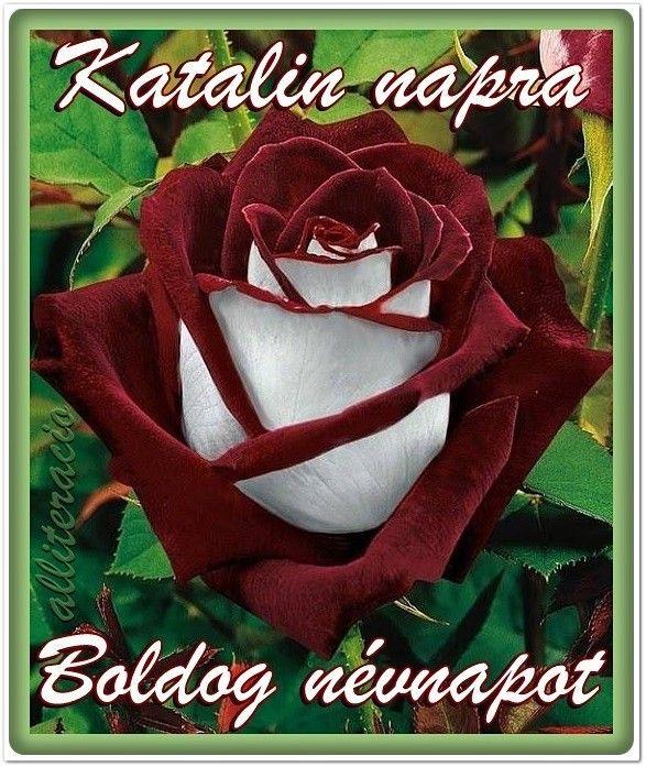 névnap, Katalin, feliratos, képek, képeslap, virágok, rózsa,