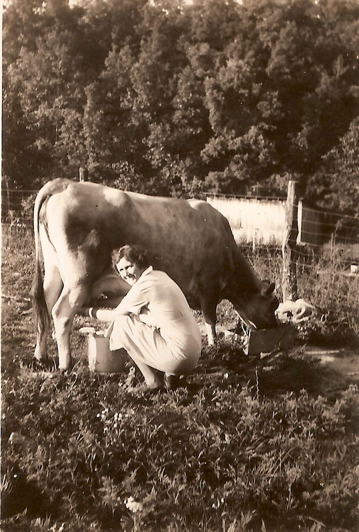 Milking the family cow Tennessee 1930  Rural America