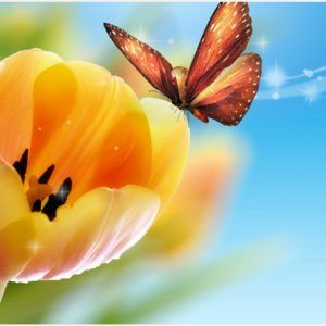 Flower With Butterfly Wallpaper | flower with butterfly wallpaper
