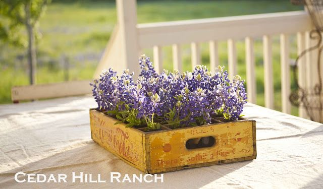 138 best bluebonnets images on pinterest round top for Painting with a twist cedar hill tx