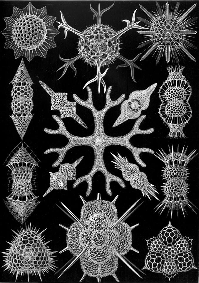 Beauty in nature: The Spumellaria lifeform: https://en.wikipedia.org/wiki/Spumellaria