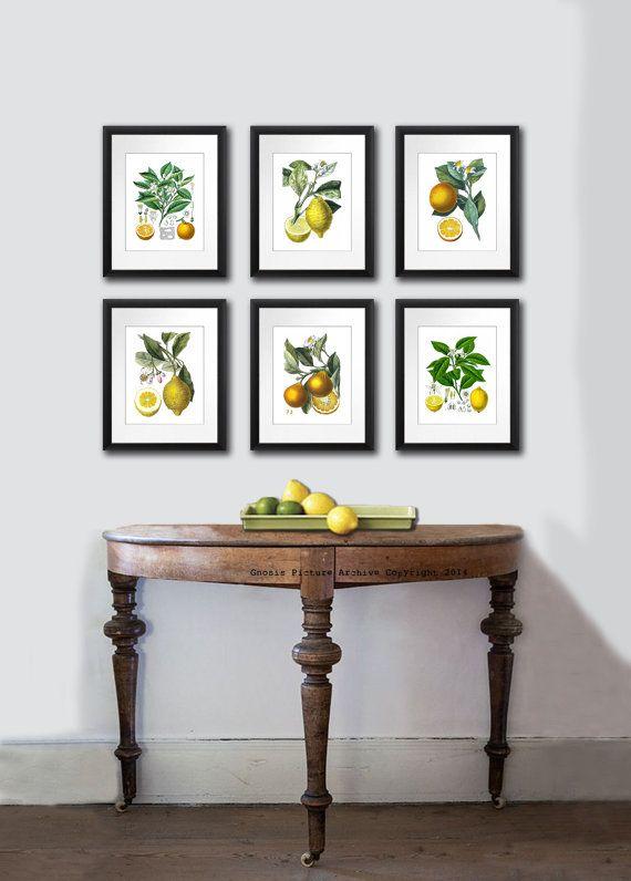 Set of 6 Vintage Orange Lemon Citrus Fruits Antique Botanical Prints Tropical Summer Decor Wall Hanging Art prints 8x10 Kitchen Wall Decor