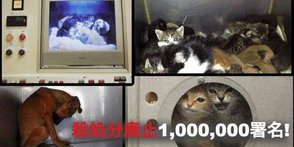 animal shelters in japan Paws (pets are worth saving) 2253 likes 90 talking about this we are a 100% volunteer operated non-profit animal shelter sanctioned by cfay we are.