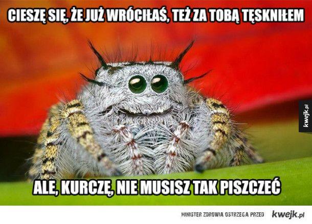 #pajak #humor #mem #kwejk