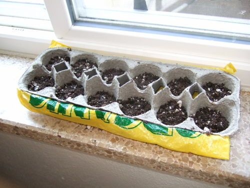 Egg Cartons Are Great for Starting Seeds