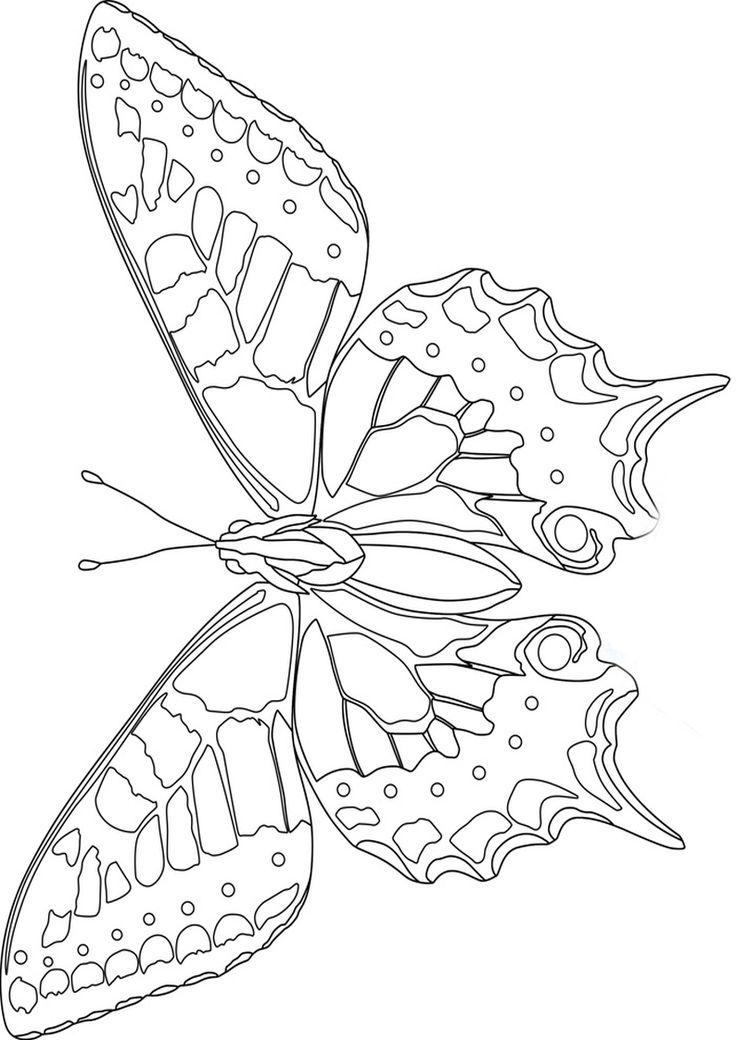 motyle do kolorowania Szukaj