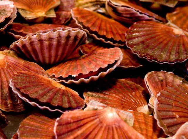 ShellsSea Shells, Seashells Design, National Geographic, Scallops Shells, Beautiful Pattern, Shells Art, Above And Earth, Pattern In Nature, Sell Seashells
