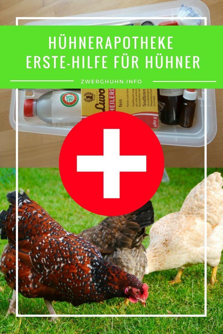 Was Gehort In Eine Huhnerapotheke Welche Medikamente Sind Wichtig Fur Die Erstversorgung Der Huhner Container Gardenin In 2020 Huhner Huhner Tranke Huhner Im Garten