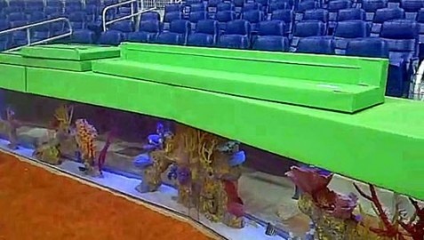 Marlins aquariums new stadium is an attractive innovation.It's about 80 Caribbean and the Pacific Ocean species collected. Will you let Marlin aquariums to see?