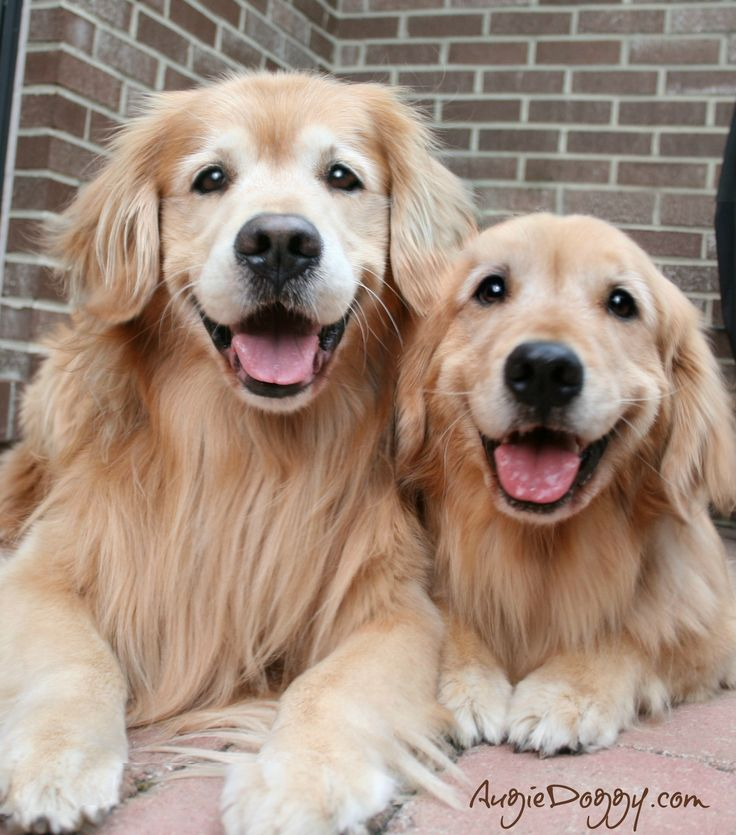 If you like goldens and mystery novels, I hope you'll check out my series. www.goldenretrievermysteries.com