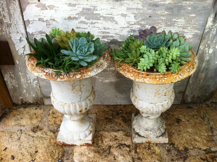 Succulent Iron Urns...Ready For Dripping Springs, Tx. Farmers Market