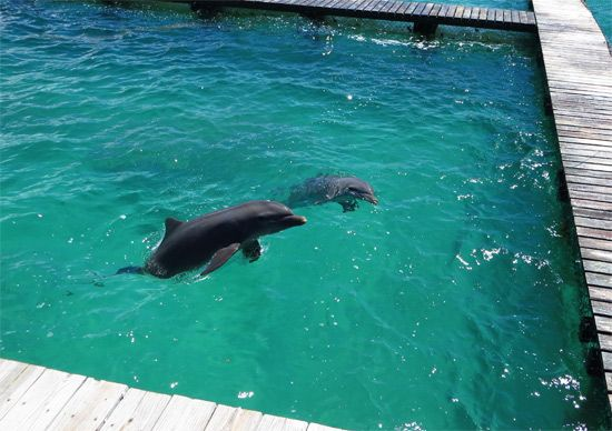 Greetings from Dolphin Discovery Anguilla!     http://www.dolphindiscovery.com/anguilla/anguilla-location-overview.asp