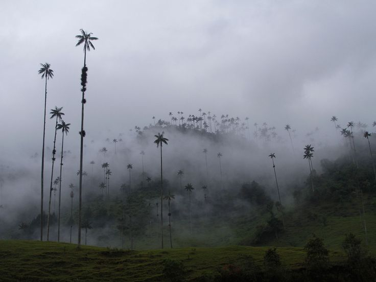 in the Colombian highlands, the magnificent Valle de Cocora