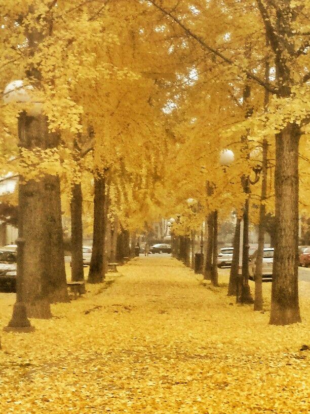 Autumn in Vercelli #Italy
