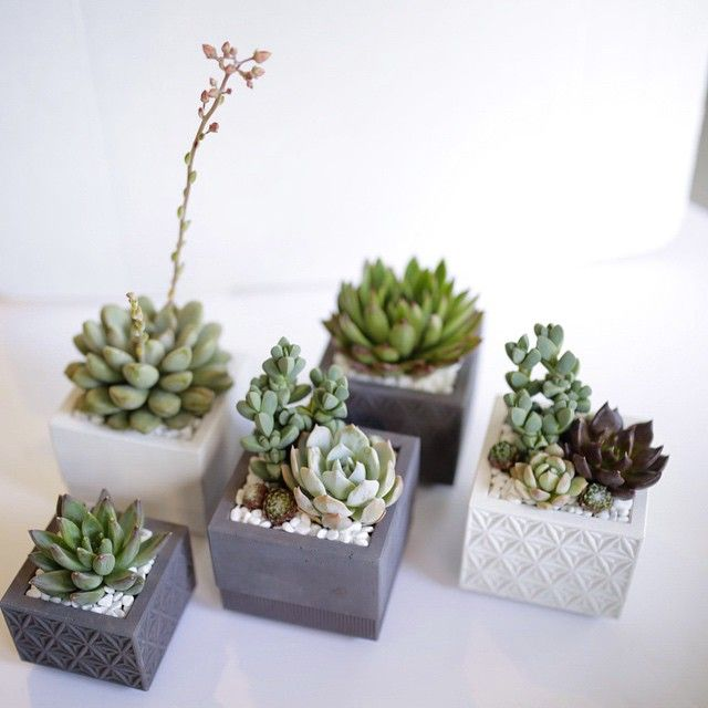 @nystromgoods concrete planters are back in stock! Pop into @dianiliving and pick one up for your mama! // #dallavita #dianiliving #concrete #succulents