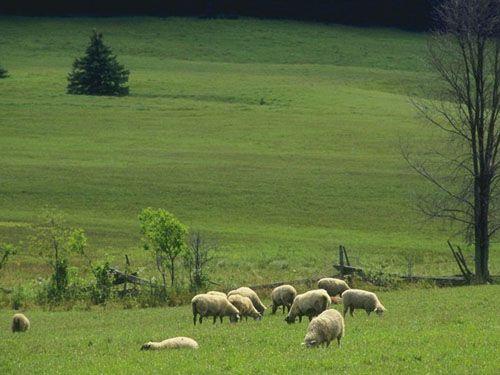 Ενισχύονται κτηνοτρόφοι που επλήγησαν από φυσικές καταστροφές: Ενισχύσεις σε συνολικά 111 κτηνοτροφικές μονάδες σε έξι νομούς της χώρας θα…