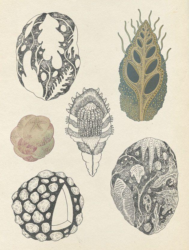 Fossils scientific illustration by Katie Scott, Jules Verne