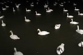 Resultado de imagen de swans band