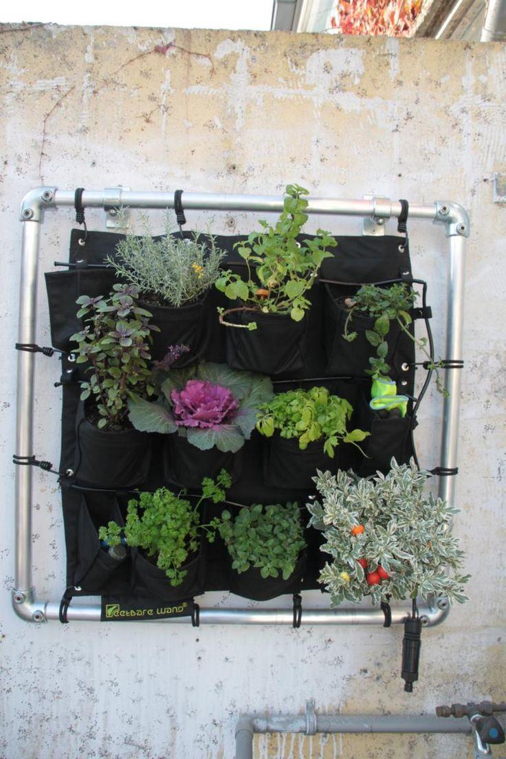 15 besten k belpflanzen bilder auf pinterest zimmerpflanzen balkon und der balkon. Black Bedroom Furniture Sets. Home Design Ideas