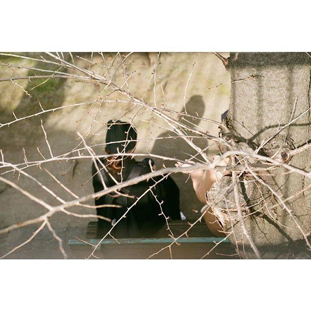 【a.p.p.tokyo】さんのInstagramをピンしています。 《… LeicaM3/double-stroke 春の歩み #Leica #LeicaM3 #elmar #elmar9cm #madeinwetzlar #leicaphotography #fujifilm #fuji400 #filmcamera #filmphotography #板橋 #蓮根 #桜》