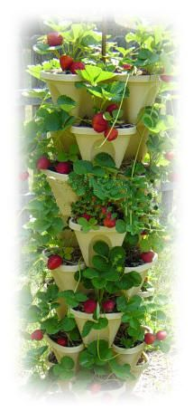 Portable and Stackable Patio Vegetable Garden...Grow 30 plants in 14 square inches of space!
