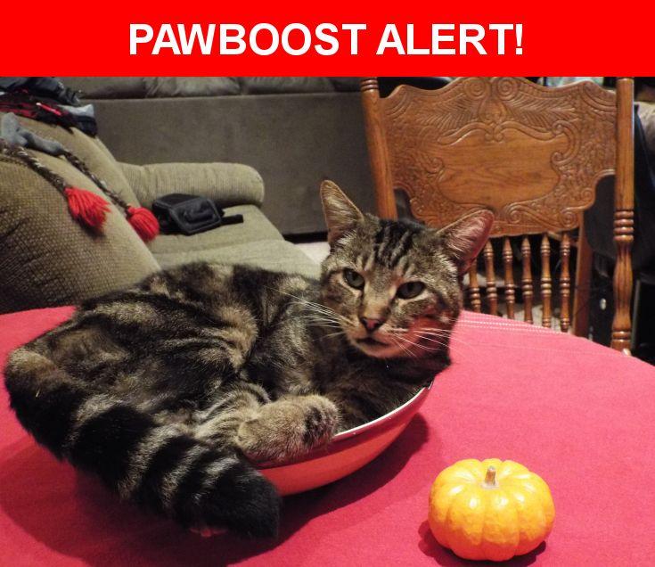 Please spread the word! Django was last seen in Forestville, CA 95436.