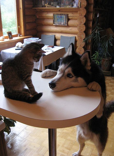 this looks like my cat and dog ... wanna play?  please play?  do you want to play now?