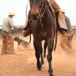 Wyman Meinzer captures the stark beauty of West Texas in photographs like Cormac McCarthy captures it in words.