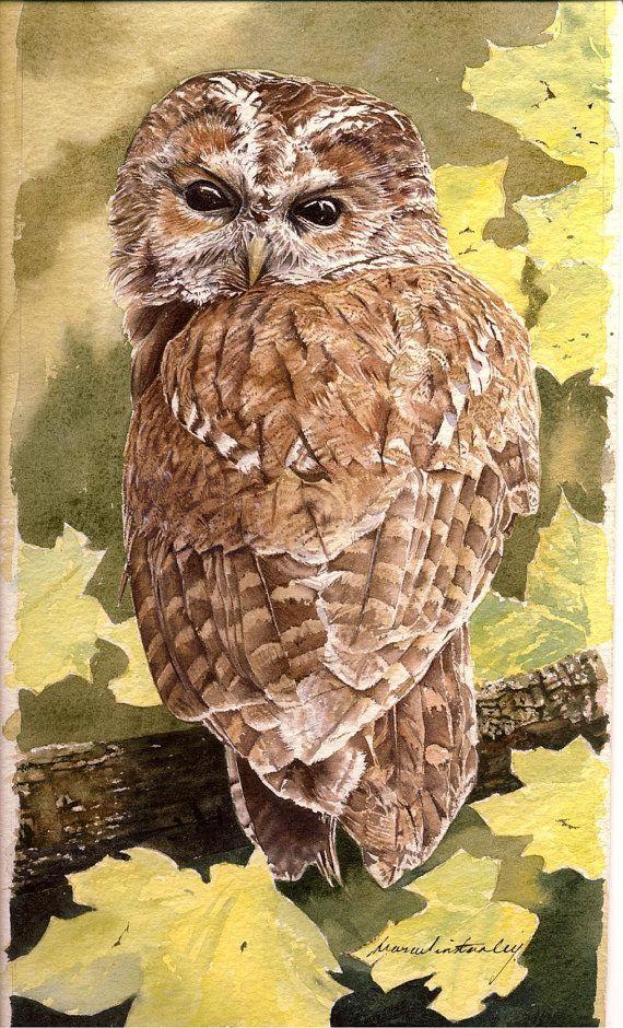 Tawny Owl Watercolour Painting by MarcWinArt on Etsy, £250.00