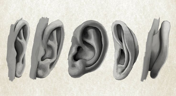 Line Drawing Ear : Best images about zbrush anatomy on pinterest