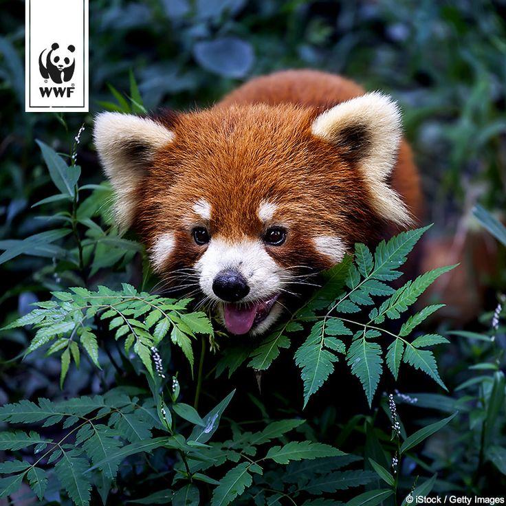 68 best WWF Bild des Tages images on Pinterest | Animais, Animales ...