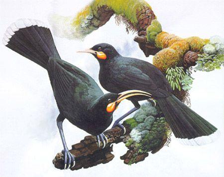 TerraNature | New Zealand Ecology - Huia