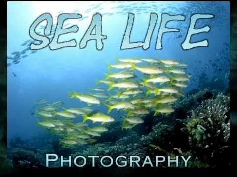 Bill MacKechnie Sea Life Photography and Music Video