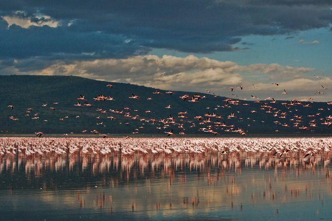 KENYA ROMANTIC HOLIDAYS SAFARI by SPLENDOURS OF AFRICA TOURS | Tripoto