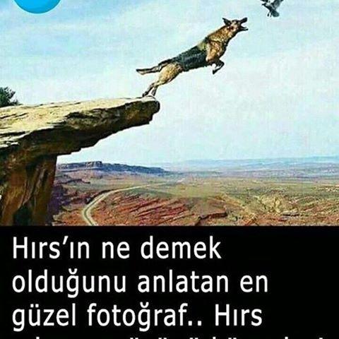 PETUNYA PSİKOLOJİ (@petunya.psikoloji)   Instagram photos and videos