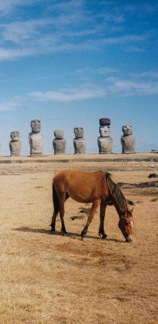 Die Einsamkeit der Osterinsel mit ihrer mystischen Geschichte, den kolossalen Steinfiguren, wilden Pferden und liebenswürdigen Menschen wirkt wie ein Magnet. Das Rätsel um die tonnenschweren Moai-Figuren besteht bis heute – gerade das lockt viele Touristen an. Mehr dazu: http://www.travelbook.de/welt/Besuch-auf-der-Osterinsel-Einsamkeit-und-kolossale-Raetsel-623369.html